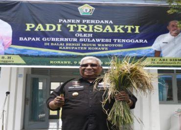Panen Perdana Padi Trisakti Oleh Gubernur Ali Mazi Di Wawotobi